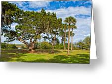 The Grounds Of The Kingsley Plantation Greeting Card