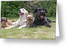 The Group Of Dogs Greeting Card
