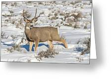 The Gtnp Mule Deer Buck Greeting Card