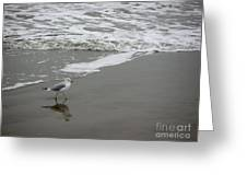 The Gulf In Shades Of Gray - Strutting Greeting Card