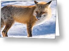 The Handsome Hunter Greeting Card