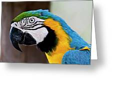The Happy Macaw Greeting Card