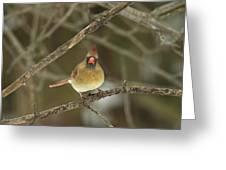 The Haridan - Northern Cardinal - Cardinalis Cardinalis  Greeting Card