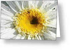 The Heart Of A Daisy Greeting Card