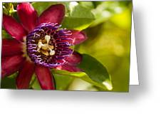 The Heart Of A Passion Fruit Flower Greeting Card by Andres Leon