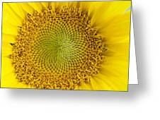 The Heart Of The Sunflower Greeting Card