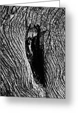 The Hermit In The Woods Greeting Card