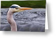 The Heron Greeting Card