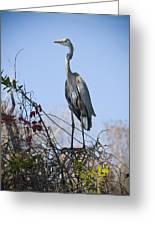The Heron Perch Greeting Card