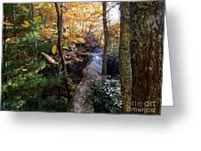 The Hidden Log Rock Greeting Card