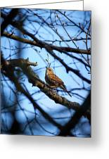 The Hiding Singer. Dunnock Greeting Card