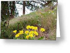 The Hillsides Are Alive Greeting Card