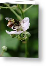The Honey Gatherer Greeting Card