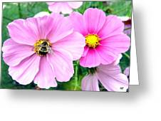 The Honeymaker Greeting Card
