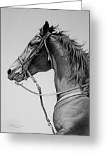 The Horse Greeting Card by Harvie Brown