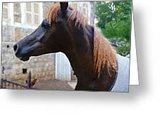 The Horse In The City Greeting Card