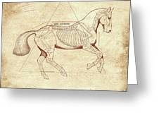 The Horse's Canter Revealed Greeting Card