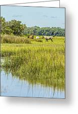The Horses Of Cumberland Island Greeting Card