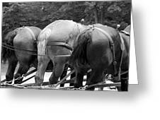 The Horses Of Mackinac Island Michigan 03 Bw Greeting Card