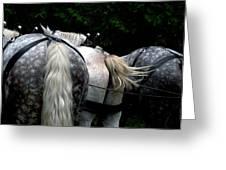 The Horses Of Mackinac Island Michigan 04 Greeting Card