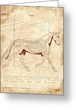 The Horse's Trot Revealed Greeting Card