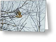 The House Finch In-flight Greeting Card