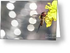 The Hoverfly Greeting Card