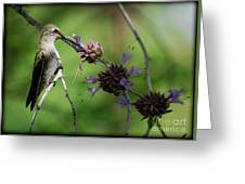 The Hummer  Greeting Card