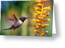 The Hummingbird And The Bee Greeting Card
