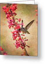 The Hummingbird And The Spring Flowers  Greeting Card