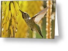 The Hummingbird And The Yellow Aloe  Greeting Card