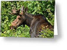 The Hungry Moose Greeting Card