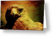 The Hunter . Portrait Of A Hawk . Texture . 40d7877 Greeting Card