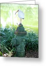 The Hydrant Bird Greeting Card