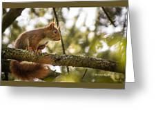 The Hypnotized Squirrel Greeting Card