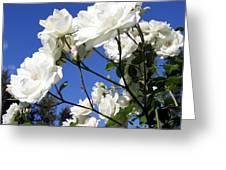 The Iceberg Rose Greeting Card
