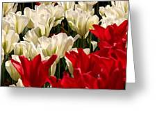 The Image Of A Tulip Greeting Card