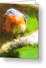The Impressive Bluebird Greeting Card