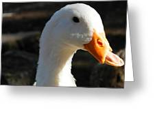 The Injured Duck Greeting Card