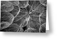 The Inner Weed 2 Monochrome Greeting Card