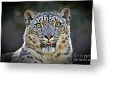 The Intense Stare Of A Snow Leopard Greeting Card