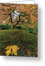 The Japanese Maple Tree In Autumn 2016 Greeting Card