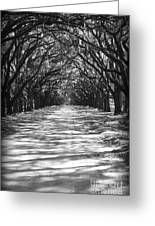 Live Oaks Lane With Shadows - Black And White Greeting Card