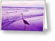 The Joy Of Ocean And Bird 2 Greeting Card