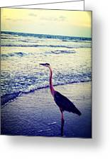 The Joy Of Ocean And Bird Greeting Card