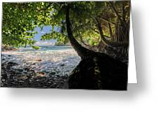 The Jungle At Onomea Bay  Greeting Card