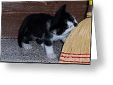 The Kitten And The Broom Greeting Card
