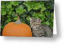 The Kitten And The Pumpkin Greeting Card