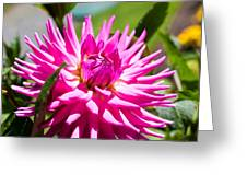 The Lady Is A Dahlia Greeting Card
