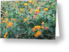 The Lantana In The Near 20 Greeting Card